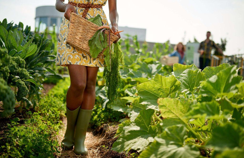 women-farm